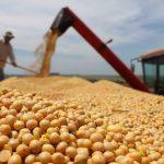 Soja, um dos alimentos mais perigosos para sua saúde