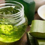 Babosa: conheça os benefícios desta planta medicinal milenar