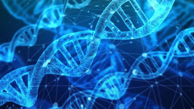DNA, o software da natureza que comanda todas as funções de nosso corpo