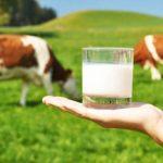 Leite de Vaca: beber ou não beber, questão que divide opiniões