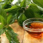 Urtiga, planta que combate problema crônico dos homens pós 50 anos