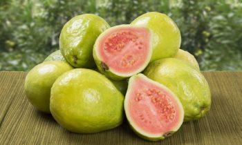 Goiaba, a superfruta considerada como a mais saudável para consumo