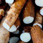 Mandioca: um dos alimentos mais saudáveis da culinária brasileira