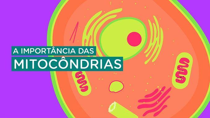 Mitocôndrias, parasitas responsáveis pela vida e a saúde dos seres vivos