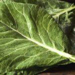 Couve, hortaliça rica em nutrientes e com muitos benefícios para a saúde