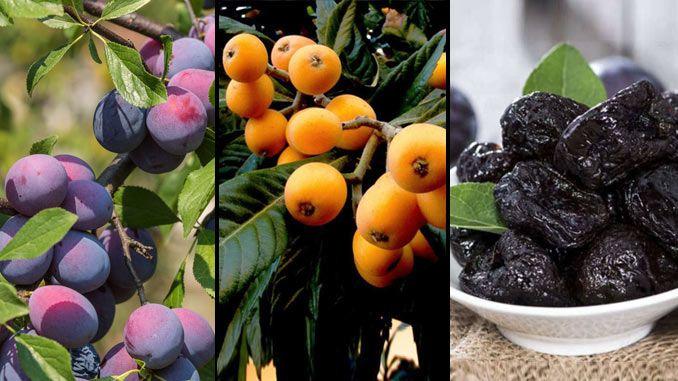 Ameixa: fruta com muitos benefícios para a saúde