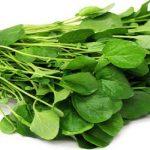 Agrião: conheça seus benefícios para a saúde e suas propriedades medicinais
