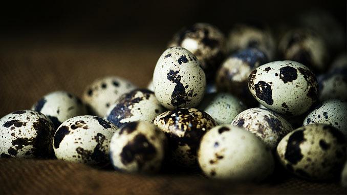 Ovo de codorna: pequeno no tamanho mas gigante em nutrientes